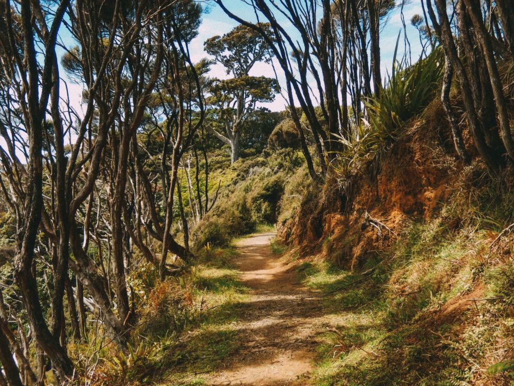 10 Absolutely Beautiful Hiking Trails You Have To Do In New Zealand (6)