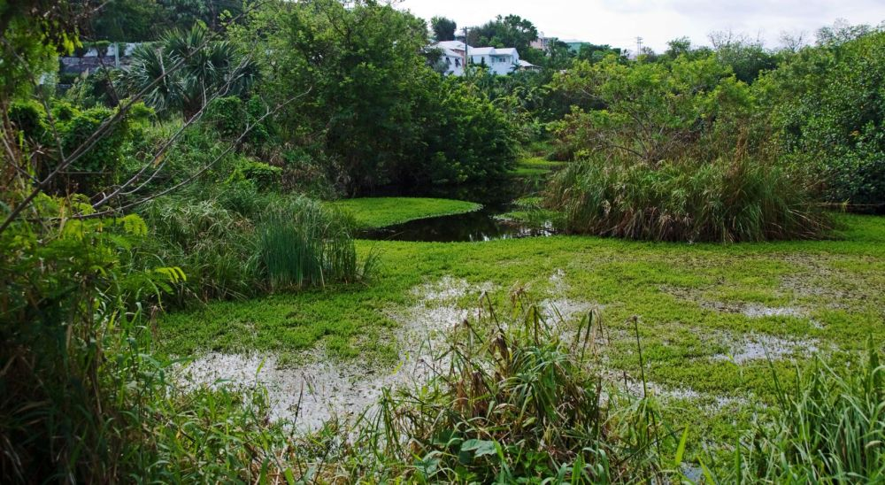 11 Things You Have To See and Do When Visiting Bermuda (6)