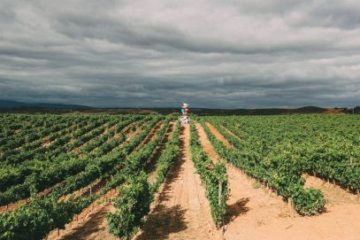 Afternoons In Spanish Vineyards In La Rioja... And Evening In Bilbao In The Spanish Basque Country (5)
