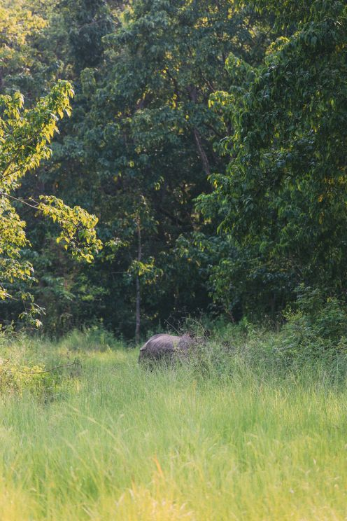 The Search For The One-Horned Rhino... In Chitwan, Nepal (26)