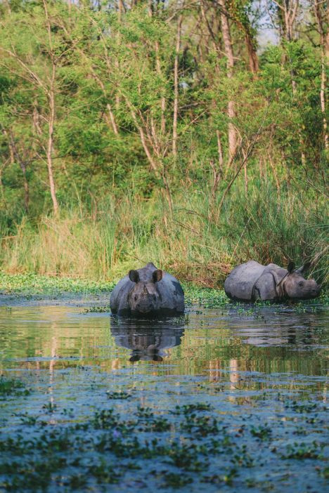 The Search For The One-Horned Rhino... In Chitwan, Nepal (33)