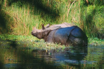 The Search For The One-Horned Rhino... In Chitwan, Nepal (35)