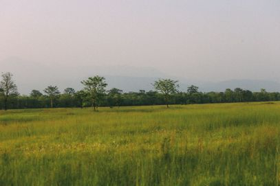 The Search For The One-Horned Rhino... In Chitwan, Nepal (50)