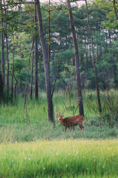 The Search For The One-Horned Rhino... In Chitwan, Nepal (54)