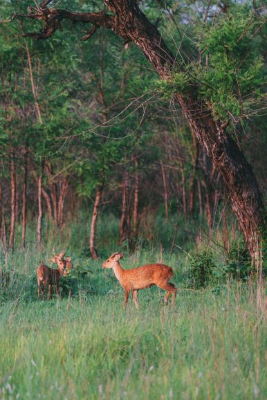 The Search For The One-Horned Rhino... In Chitwan, Nepal (57)