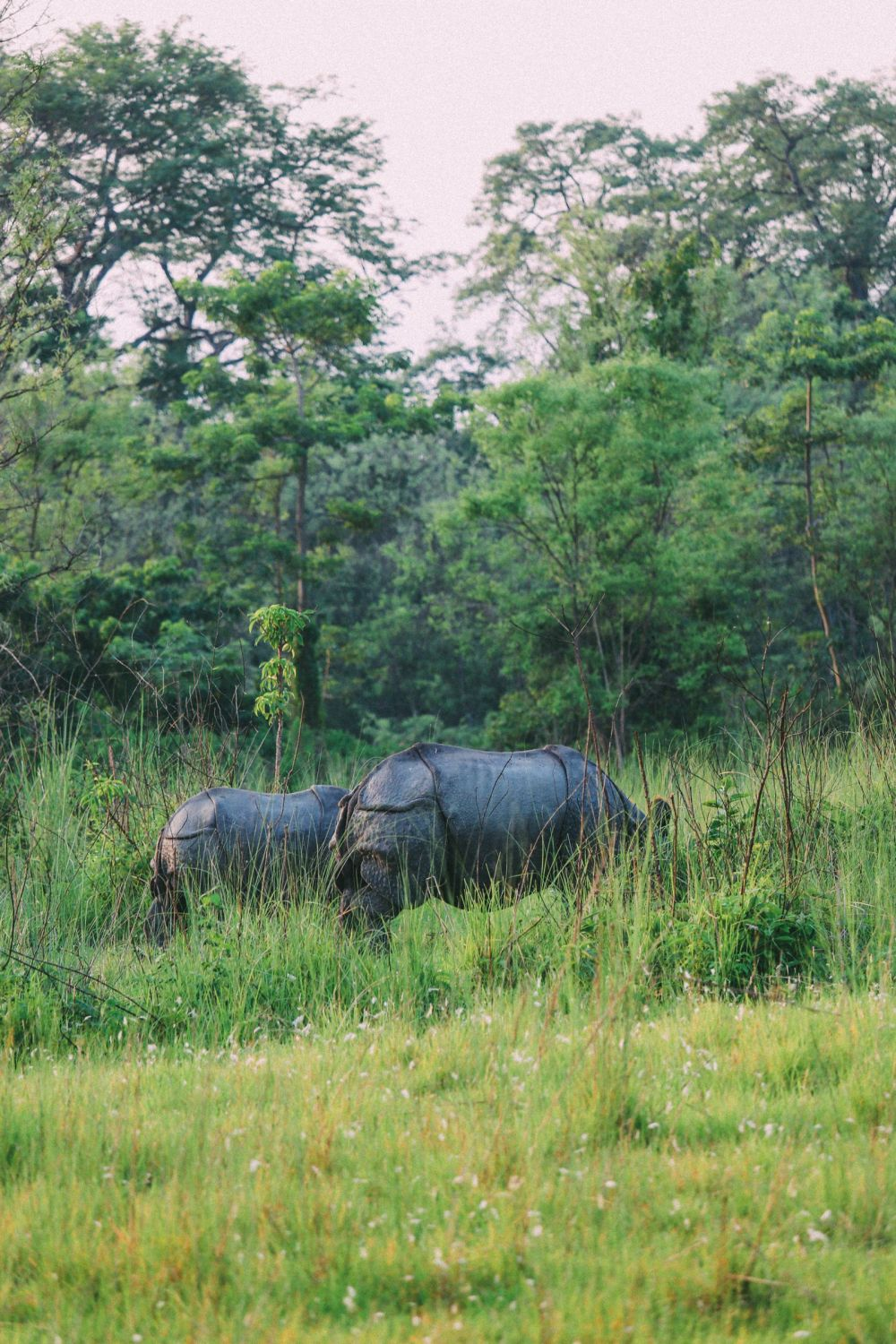 The Search For The One-Horned Rhino... In Chitwan, Nepal (60)