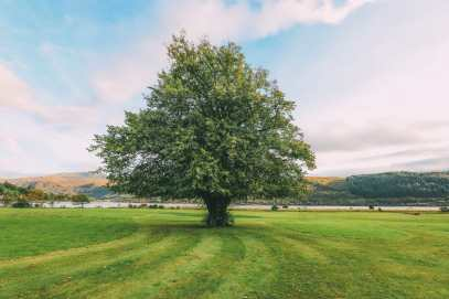 Whisky Drinking, Loch Rowing And Picnicking In The Scottish Highlands (33)