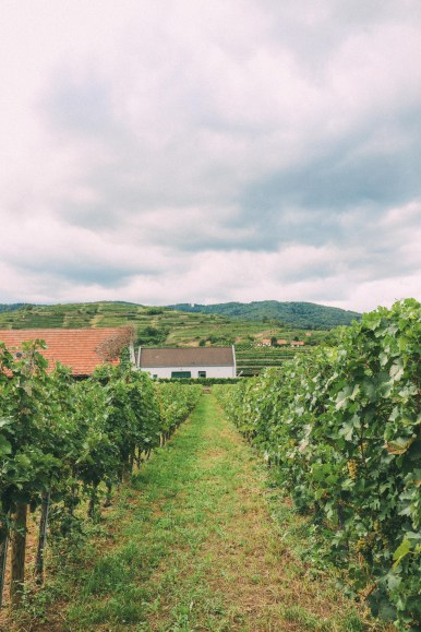 A Trip To Wachau - The Most Beautiful Valley In Austria (21)