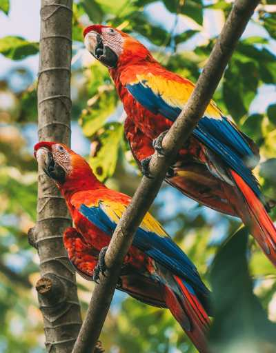 10 Amazing Things To Do In Costa Rica (22)