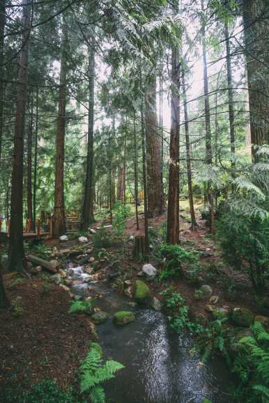 How To Spend A Lazy Day In Vancouver, Canada...(Plus, Exploring The Incredible Capilano Suspension Bridge) (23)