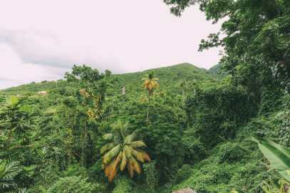 First Impressions Of The Island Of St Kitts (47)