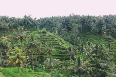 Bali Travel - Tegalalang Rice Terrace In Ubud And Gunung Kawi Temple (1)