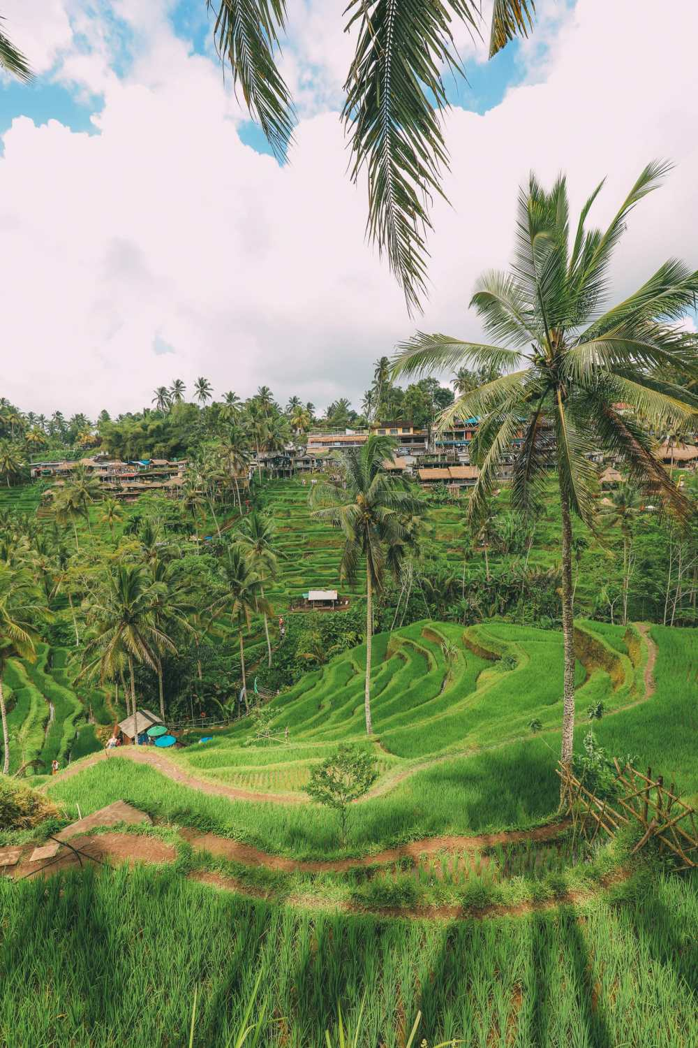 Bali Travel - Tegalalang Rice Terrace In Ubud And Gunung Kawi Temple (15)