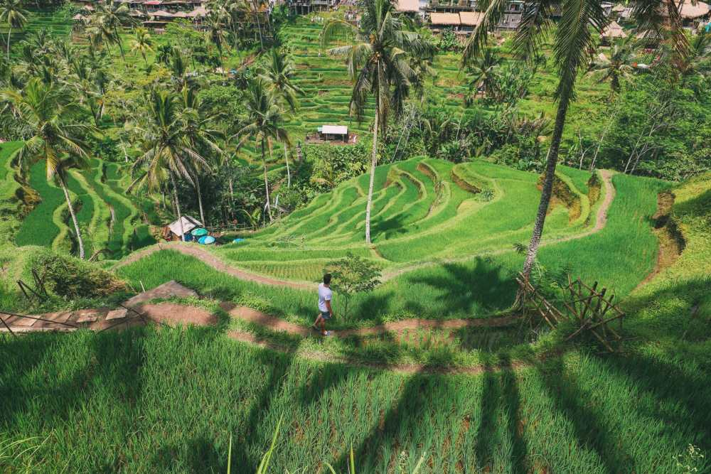 Bali Travel - Tegalalang Rice Terrace In Ubud And Gunung Kawi Temple (17)