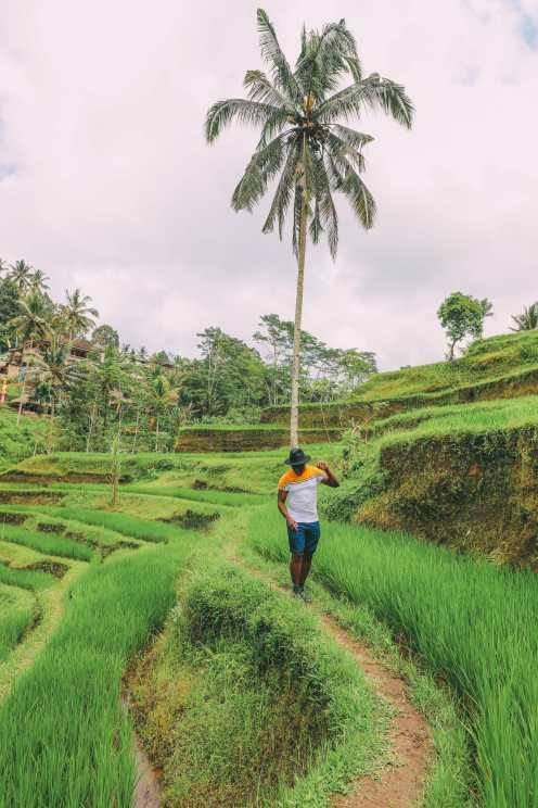 Bali Travel - Tegalalang Rice Terrace In Ubud And Gunung Kawi Temple (20)