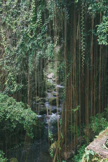 Bali Travel - Tegalalang Rice Terrace In Ubud And Gunung Kawi Temple (31)