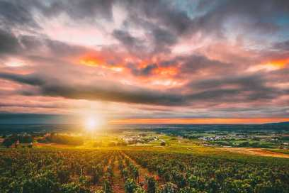 9 Beautiful Wine Regions In France You Need To Holiday In (1)