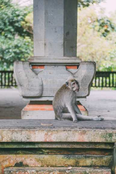 Ubud Monkey Forest In Bali - Things To Know Before You Visit (10)