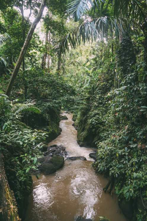 Ubud Monkey Forest In Bali - Things To Know Before You Visit (19)