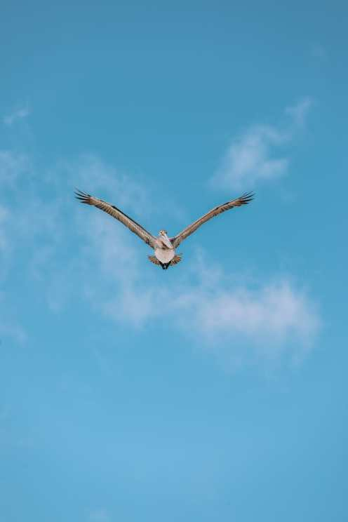 Down At The Beach House... In St Kitts, The Caribbean (2)