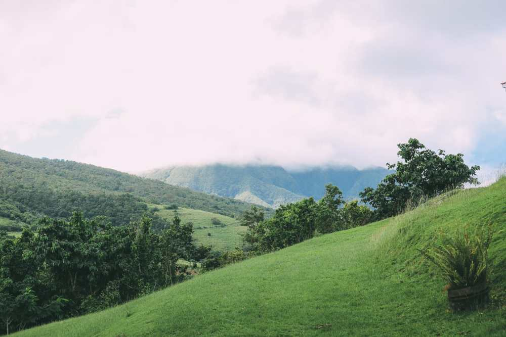 Down At The Beach House... In St Kitts, The Caribbean (34)