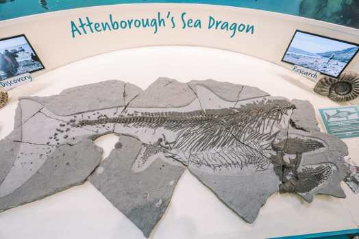 Searching For Dinosaurs And Fossils On The Jurassic Coast Of England (14)