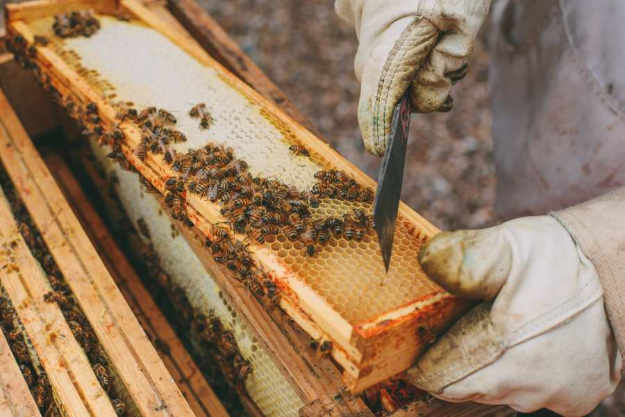 How To Be A Bee-Keeper For A Day In England (6)