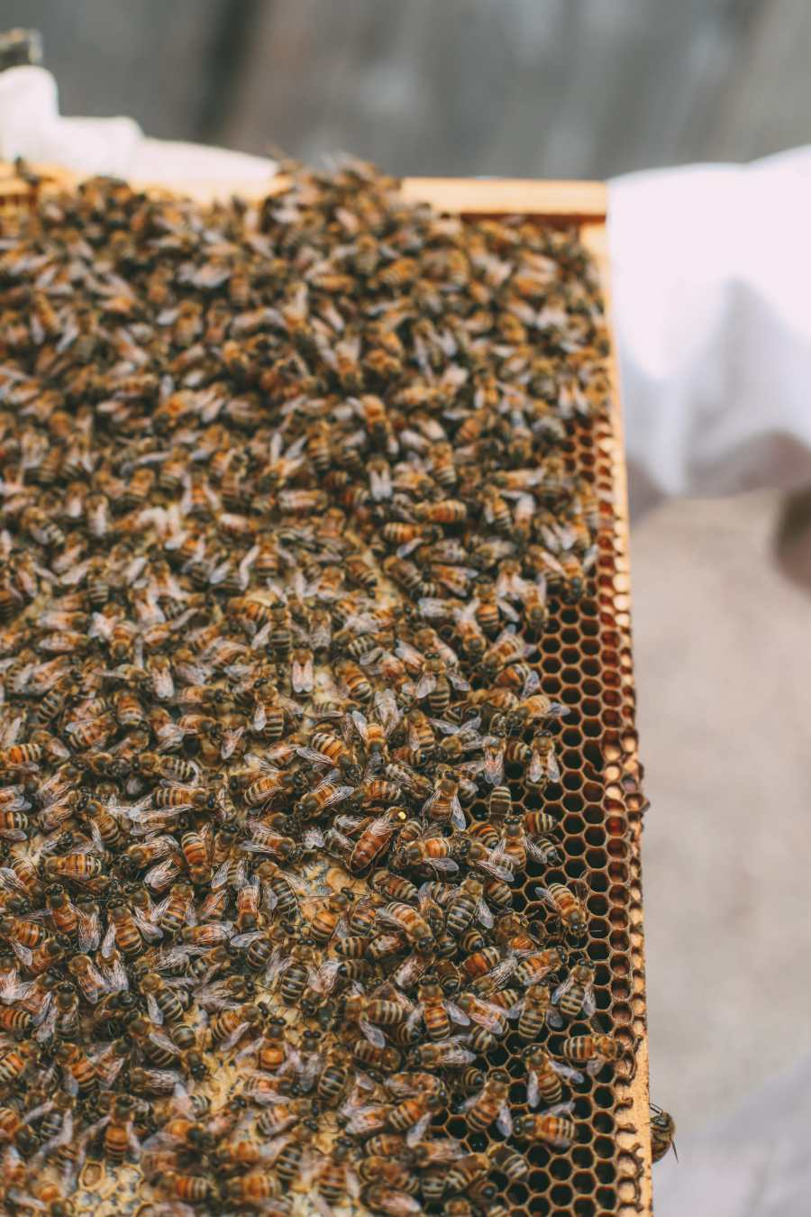 How To Be A Bee-Keeper For A Day In England (10)