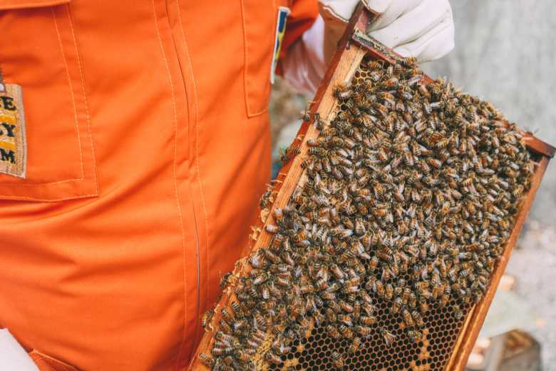 How To Be A Bee-Keeper For A Day In England (12)