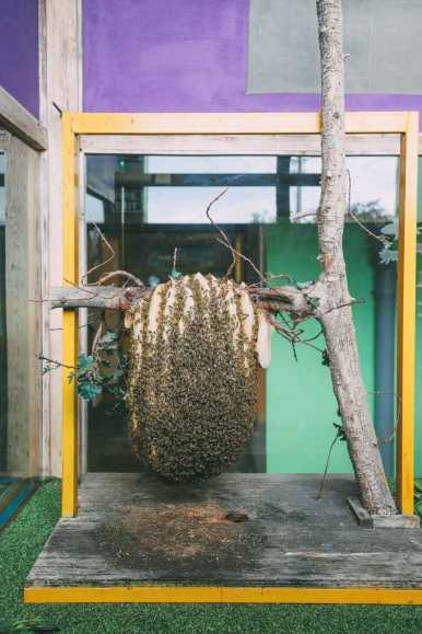 How To Be A Bee-Keeper For A Day In England (15)