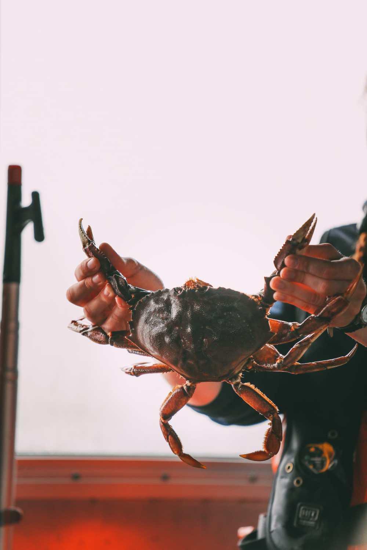 Crabbing In Ketchikan, Alaska (10)