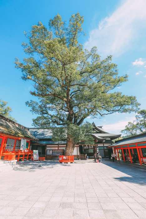 Exploring The Island Of Kyushu, Japan (11)