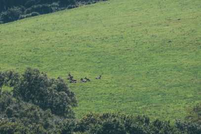 Searching For Wildlife In Exmoor, England (32)
