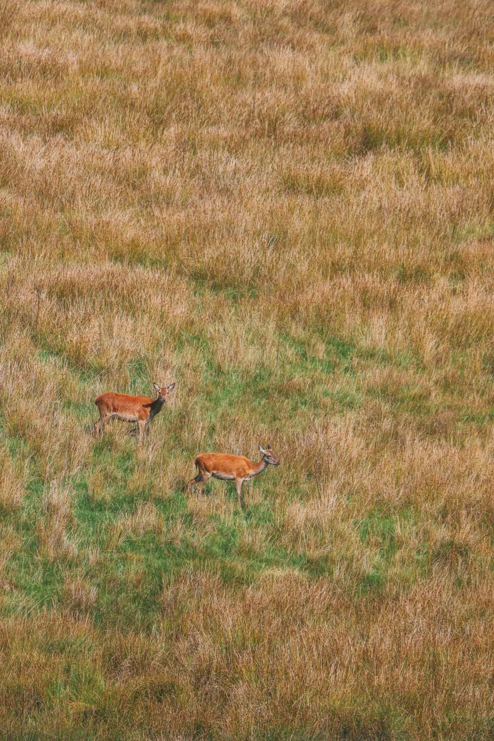 Searching For Wildlife In Exmoor, England (41)