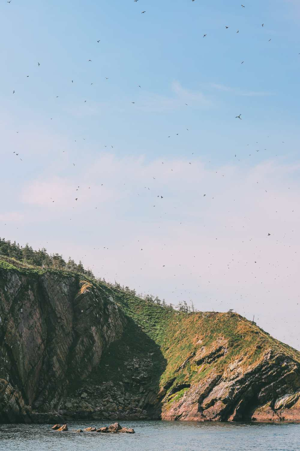 Searching For Puffins In Newfoundland, Canada (6)