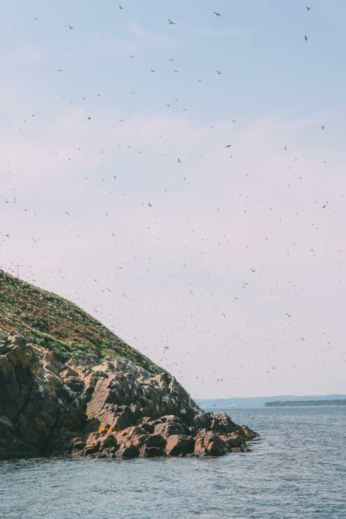Searching For Puffins In Newfoundland, Canada (7)