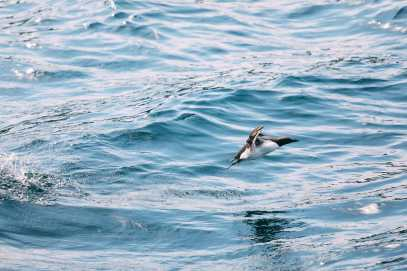 Searching For Puffins In Newfoundland, Canada (12)