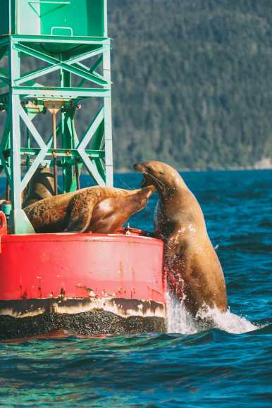 Humpback Whales, Glaciers And Northern Lights – The Most Magical Experience Aboard Celebrity Cruises Solstice To Alaska (6)
