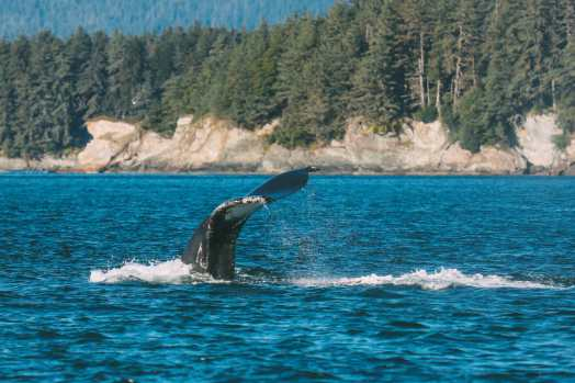 Humpback Whales, Glaciers And Northern Lights – The Most Magical Experience Aboard Celebrity Cruises Solstice To Alaska (16)