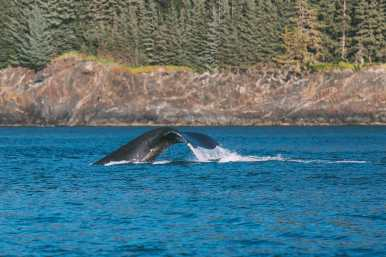 Humpback Whales, Glaciers And Northern Lights – The Most Magical Experience Aboard Celebrity Cruises Solstice To Alaska (18)