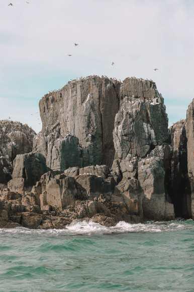 Visiting The Beautiful Bamburgh Castle & Farne Islands, England (37)