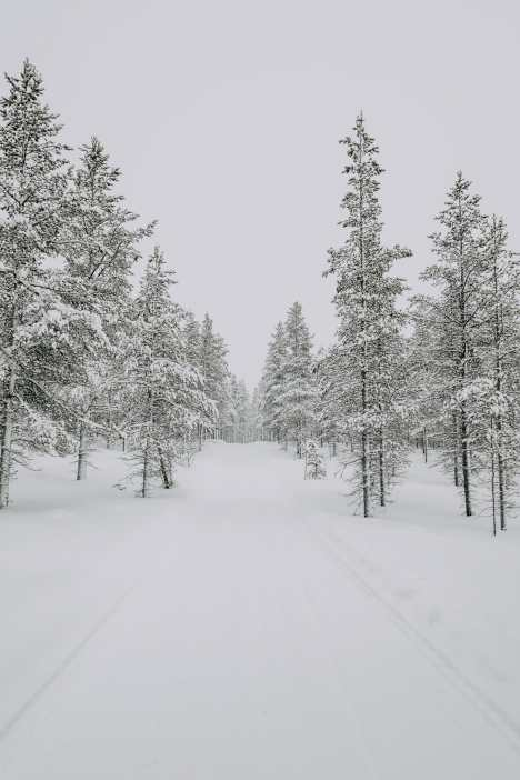 The First 24 Hours In Lapland, Finland (21)