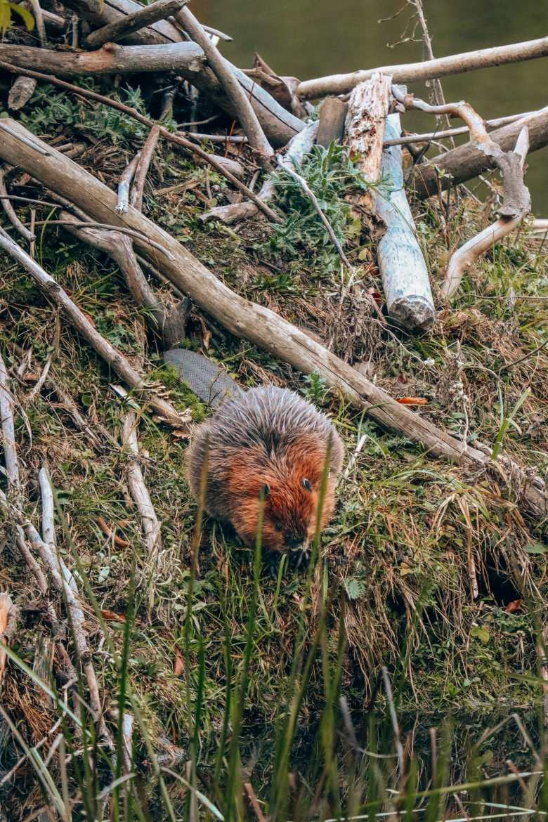 Getting Lost In Nature (And With Beavers) In Quebec, Canada (20)