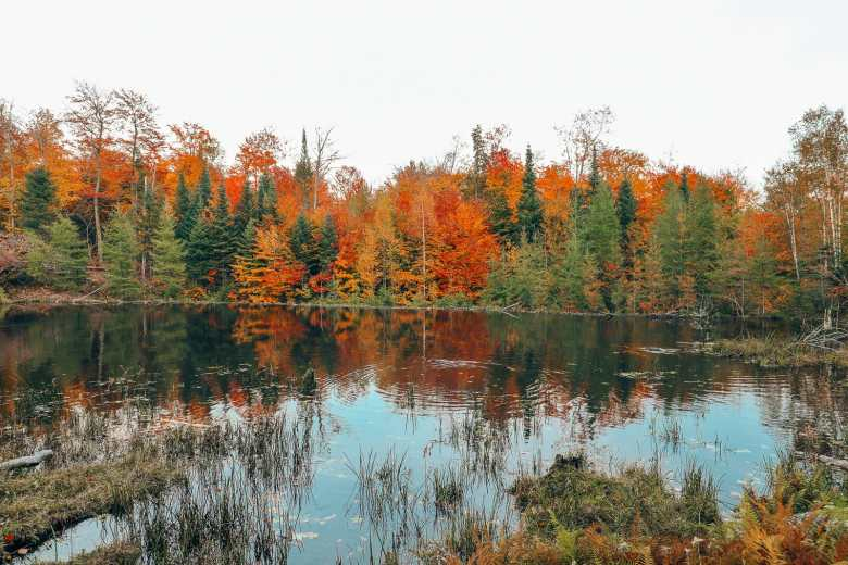 Getting Lost In Nature (And With Beavers) In Quebec, Canada (22)
