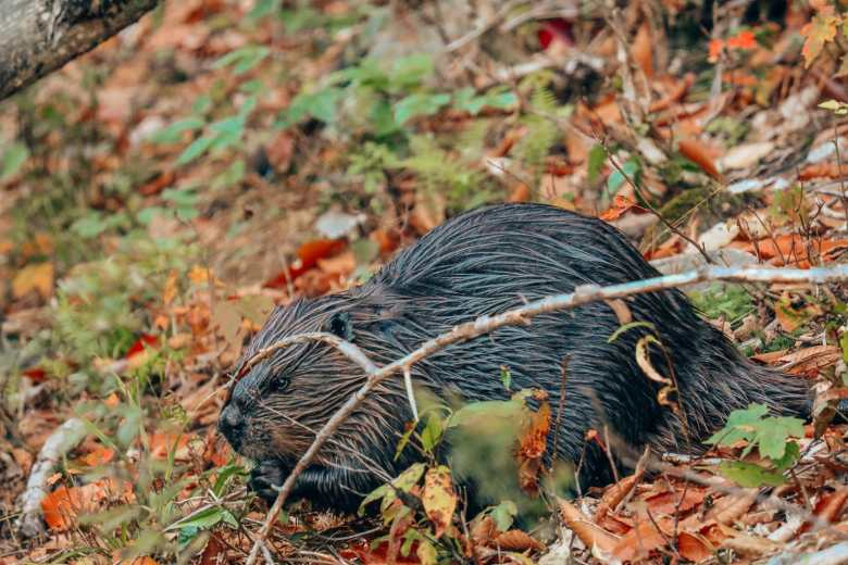 Getting Lost In Nature (And With Beavers) In Quebec, Canada (26)