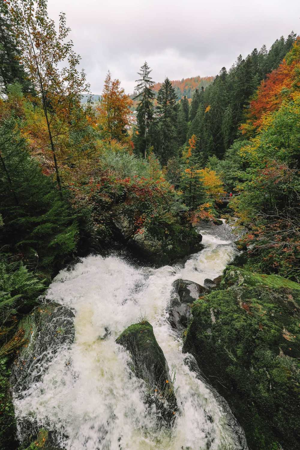 Best Things To Do In The Black Forest (30)