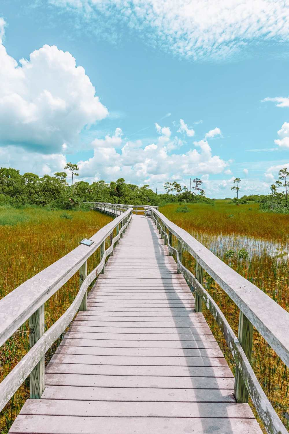 Best Things To Do In The Everglades (12)