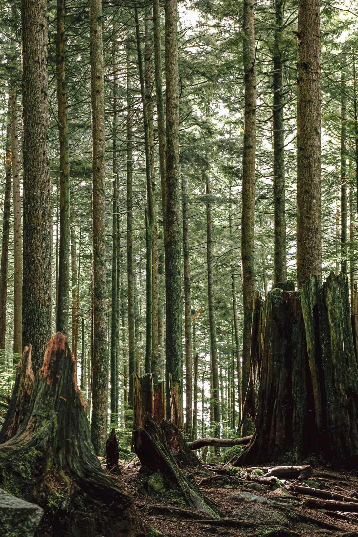 Best Hikes In British Columbia (4)