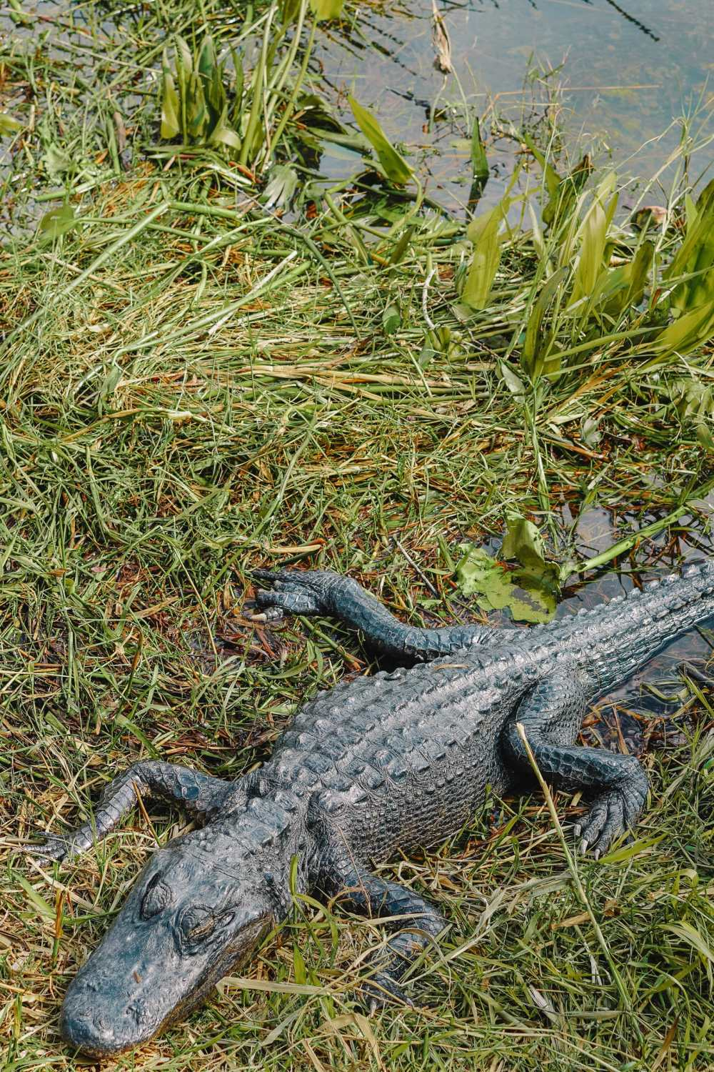 Best Things To Do In The Everglades (11)