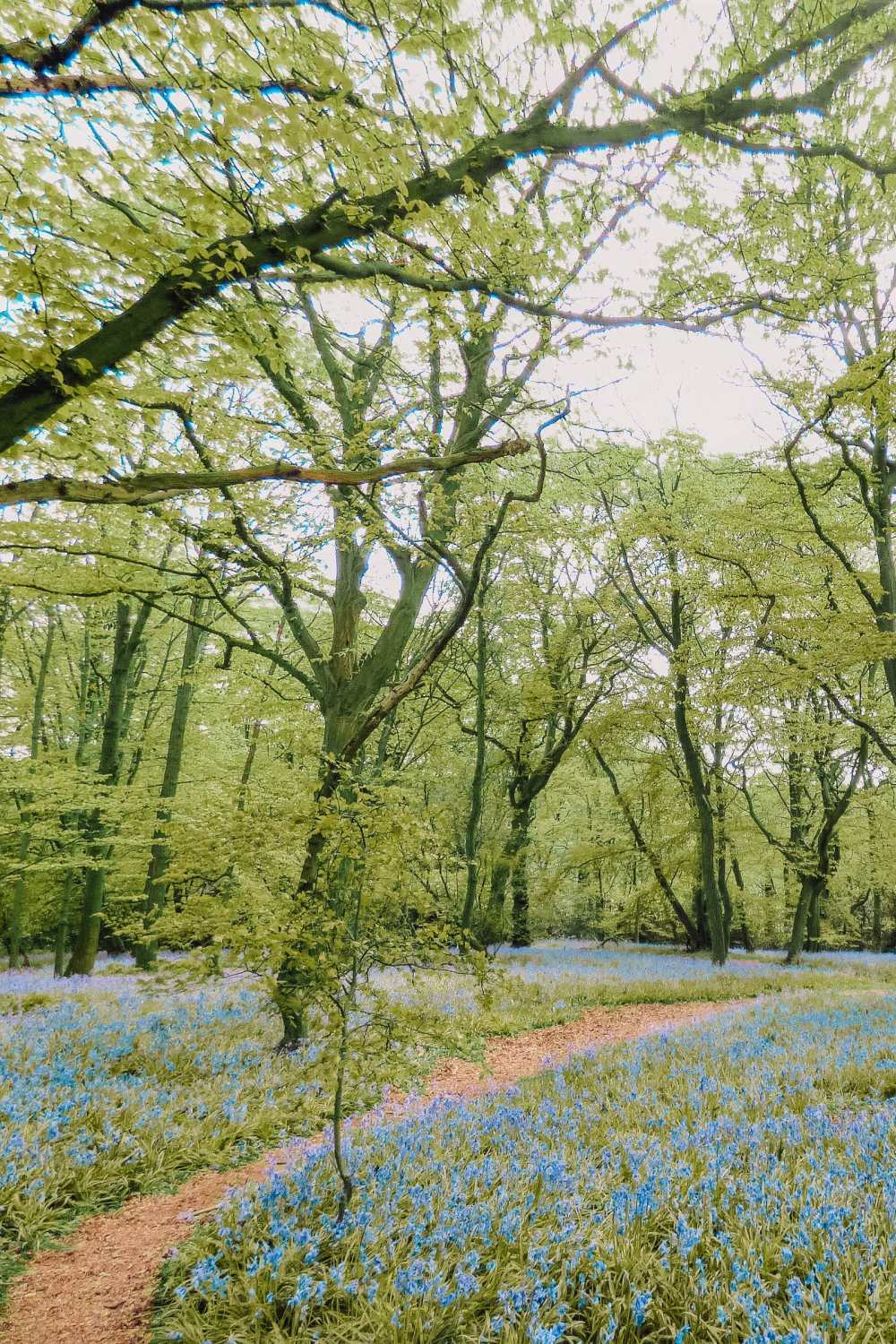 Epping Forest In North London
